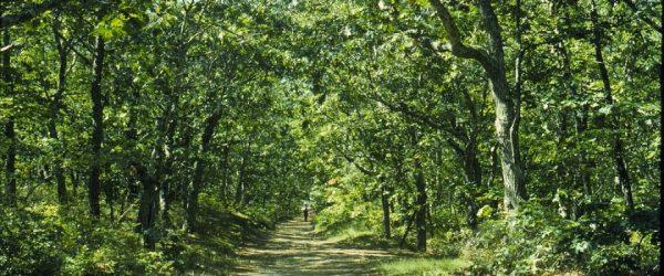 Promenons-nous dans le bois à Magny-les-Aubigny