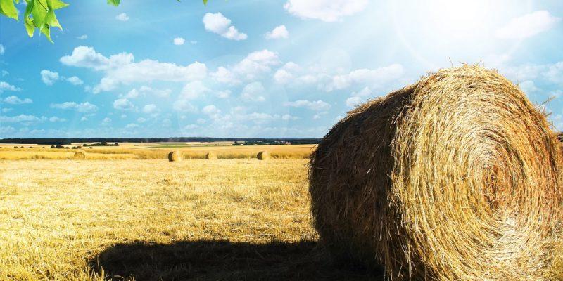 Agriculture bio à Charrey-sur-Saône
