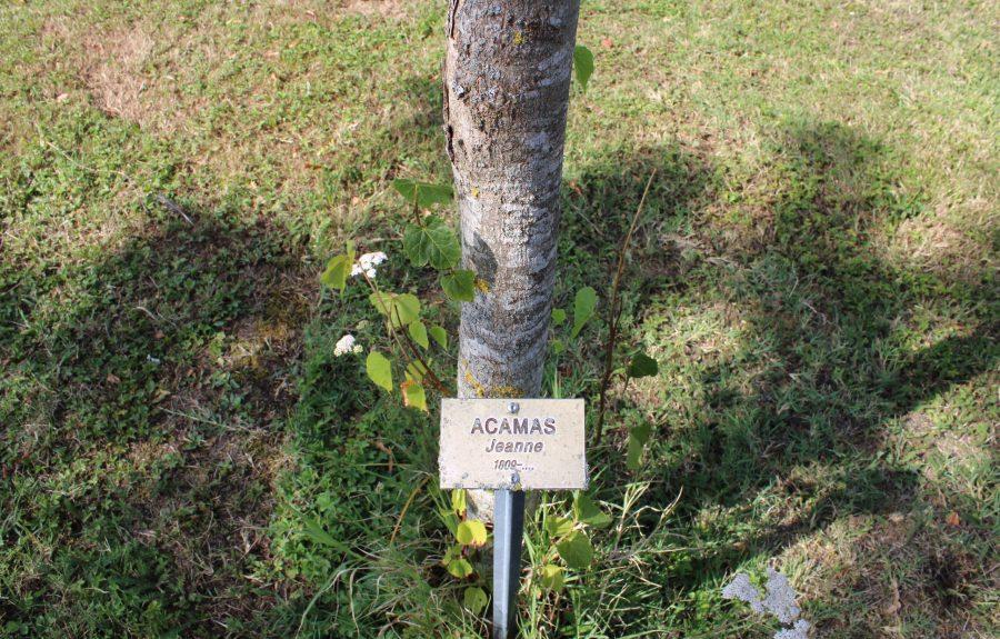 Forêt mémoire Anne-Marie Javouhey