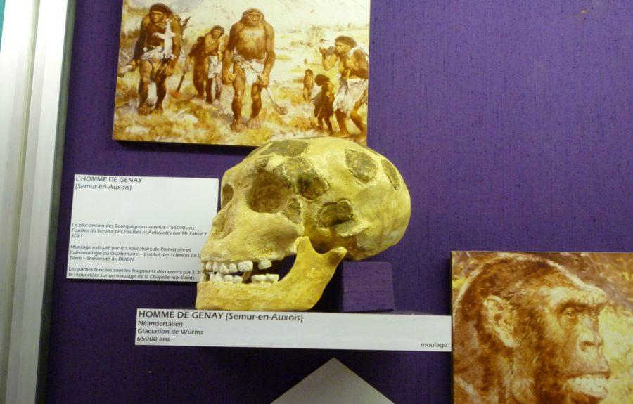 Monde archéologique du Val de Saône au premier étage du musée de la Saône et des gens de la Saône à Seurre