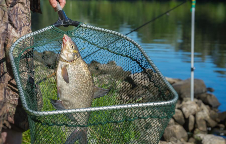 Pêche en Rives de Saône
