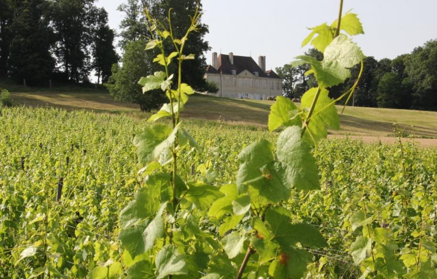 Domaine Polette à Pagny-le-Château